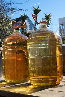 Carboys in the Sun
