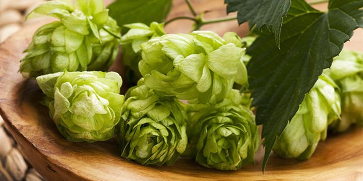 Bowl of Cascade Hops