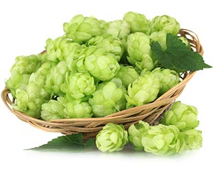 Buy Cascade Hops