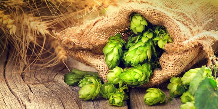 Bag of Columbus Hops