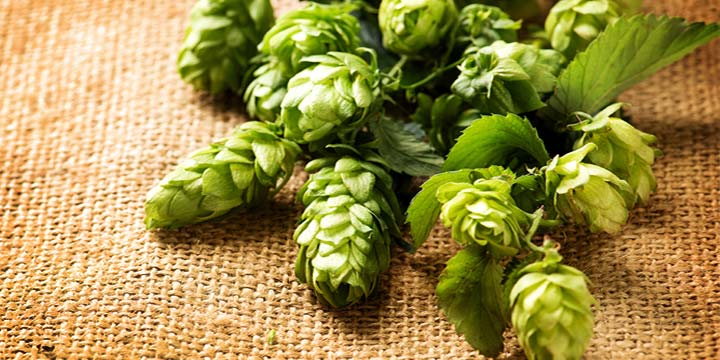Centennial Hops :: History, Plant Information & Brewing Tips