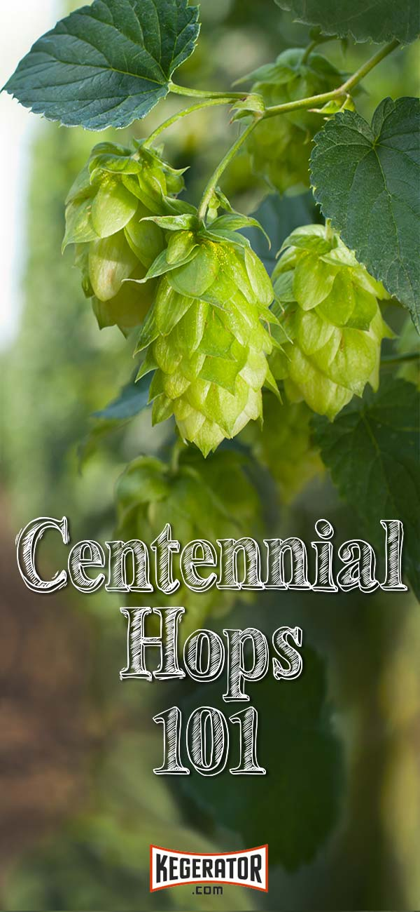 Centennial Hop Profile: Tips to Brewing Beer With This Hop