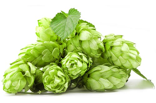 Buy Amarillo Hops