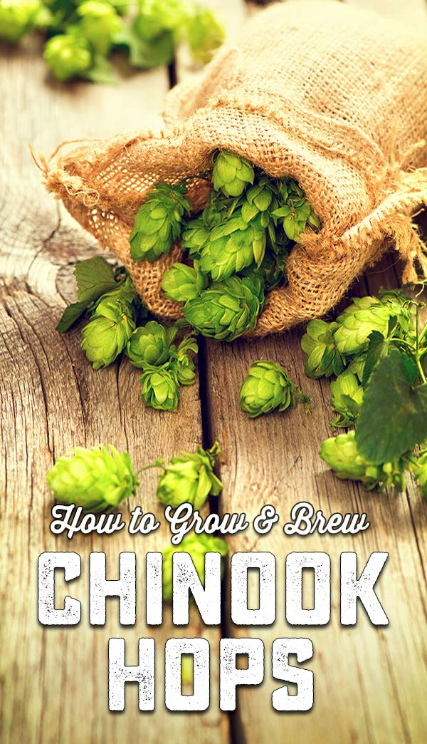 How to Grow & Brew Chinook Hops